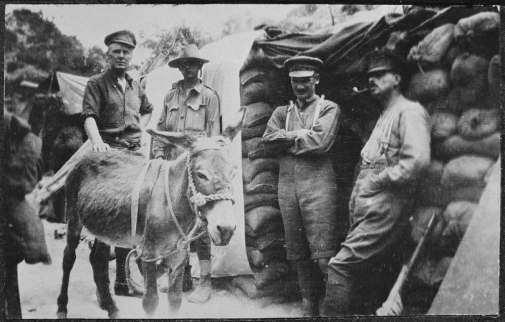 "Group with Private John Simpson Kirkpatrick (second from left) and his donkey ""Murphy""."