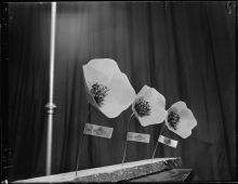 Artificial poppies for sale for Anzac Day photographed circa 23 April 1951